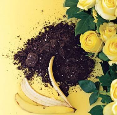 удобрение банановой шкуркой