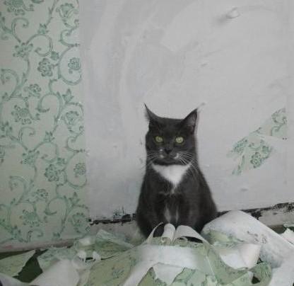 кот помощник ободрал обои