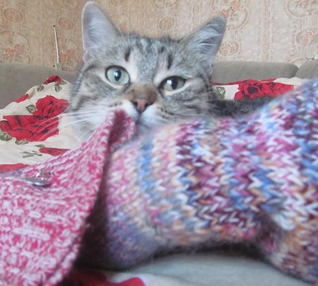 приучили кошку к лотку быстро реальная история