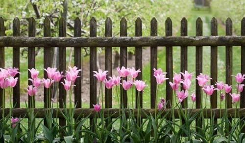 солнечное место для высадки тюльпанов