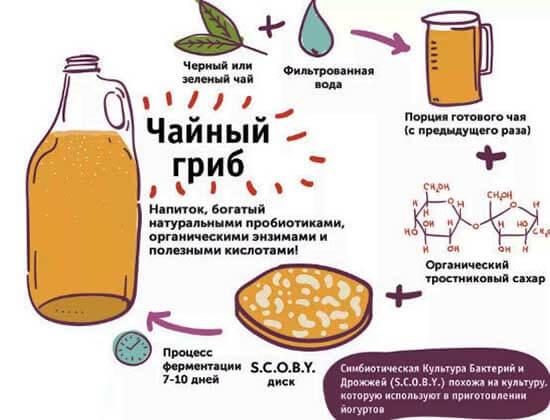 симбиоз бактерий и дрожжей - чайный гриб