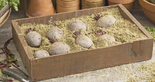 Коробки или ящики для свеклы на зиму - наполнитель песок или опилки