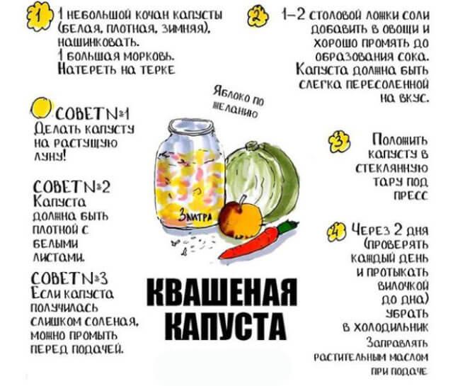 инфографика закваски кочанов