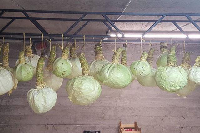 Как сохранить капусту свежей на зиму в домашних условиях